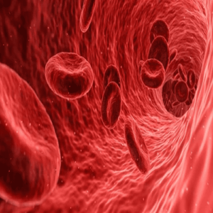 혈관 내부