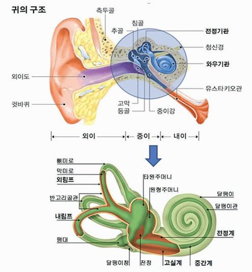 메니에르병-귀의 구조