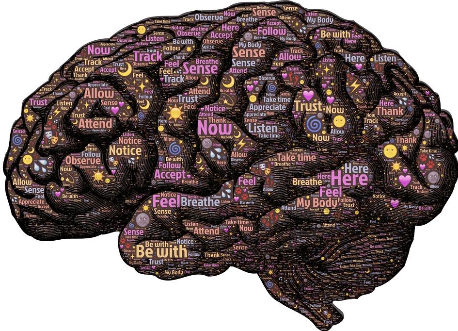 두뇌-brain