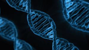 갑상선 호르몬 유전자
